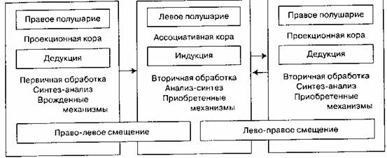 левая рука связана с правым полушарием